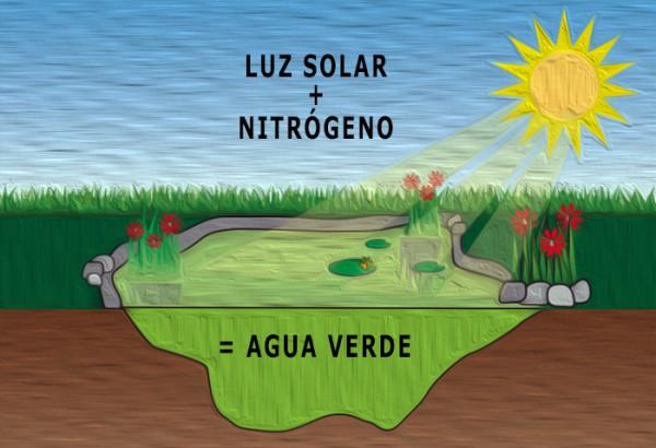 Exposición solar del estanque