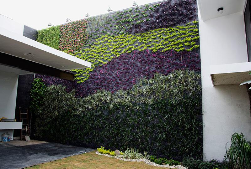 Manuel Radillo Muro verde en Mxico Tampico