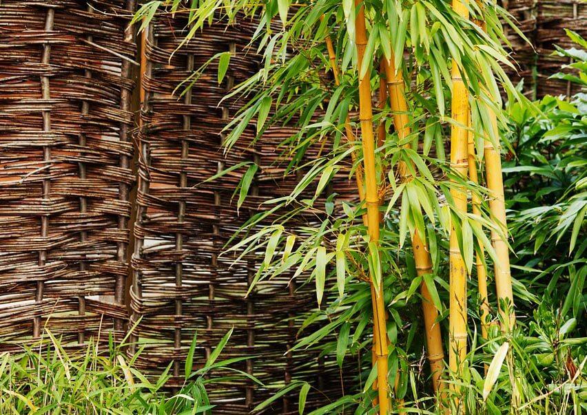 du bambou dans votre jardin