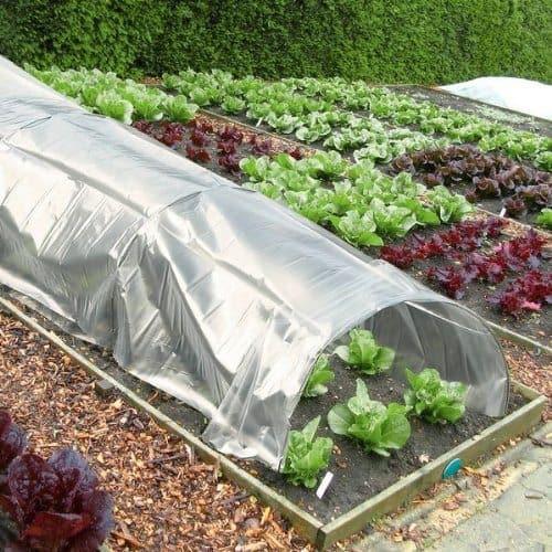 jardingue