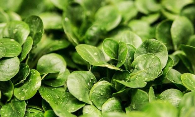 Les astuces pour bien planter ses salades