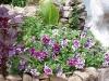 Petunia 'Purple Pirouette'