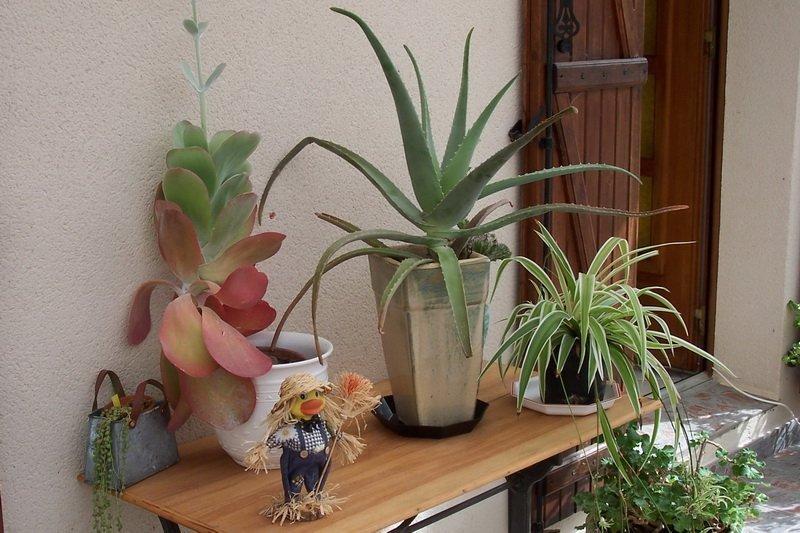 Toutes les plantes peuvent se multiplier