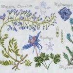 Botanique expliquée