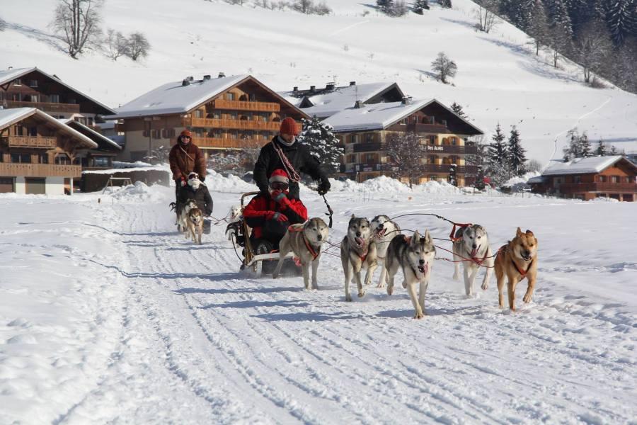 chiens-traineau-arcs-alpes