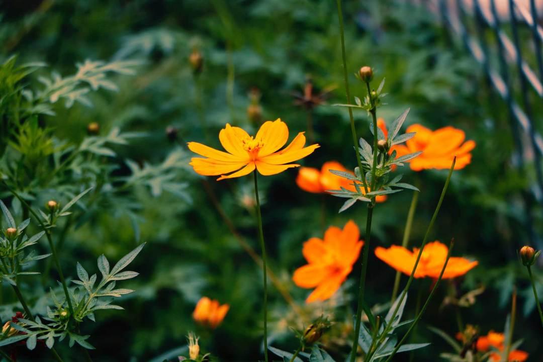 Les plantes fleuries d'extérieur