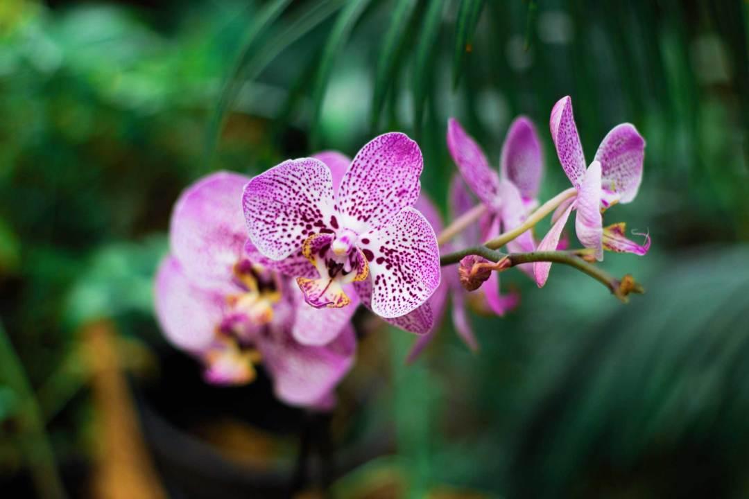 Les plantes fleuries d'intérieur