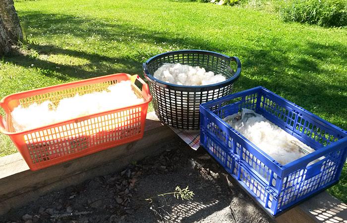 Nytvättad fårull