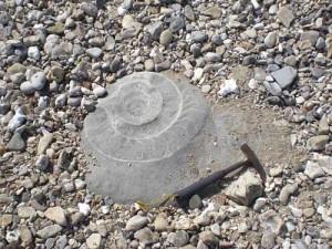 Ritrovamenti fossili a Lyme Regis (foto di Mara Barbuni)