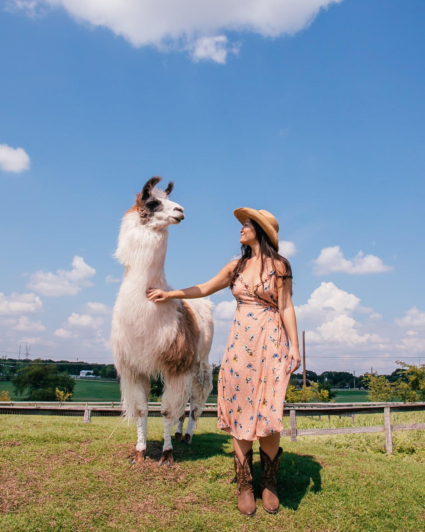 Lloving Llamas: Our Time at Shangrillama, Dallas