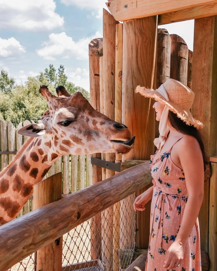 5 Great Things About Tyler's Caldwell Zoo