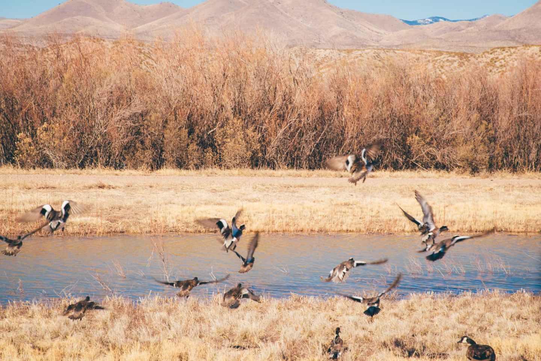 bosque del apache birds flying
