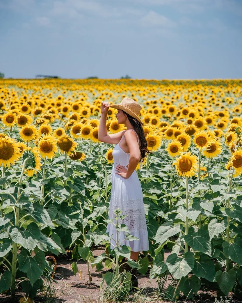 Where to Find Flower Fields In and Around Dallas
