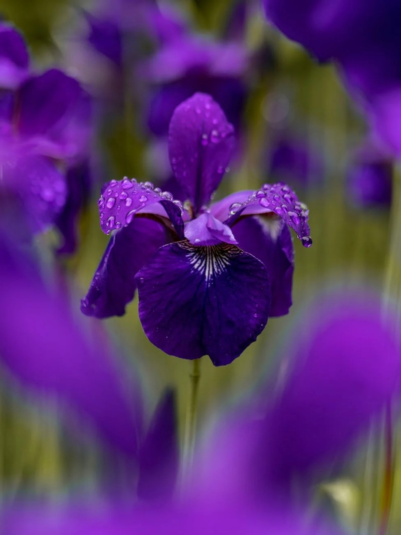 selective focus photography purple petaled flower on field