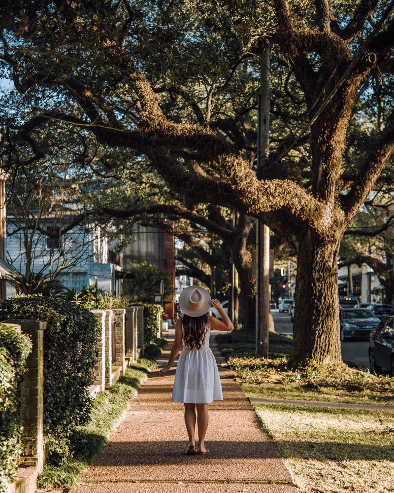 Prytania Street live oaks