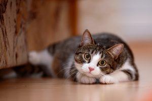 Pet Damage on Wood Floors