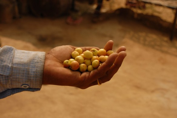 Exploring Food Security with Micro Earths expeditions
