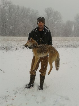 Loading a Coyote into a Dog Box [VIDEO]