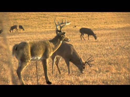 Hunting Fail: Hunter Shoots Decoy Instead of Deer [VIDEO]