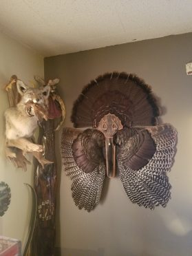 DIY Turkey Fan and Beard Mount