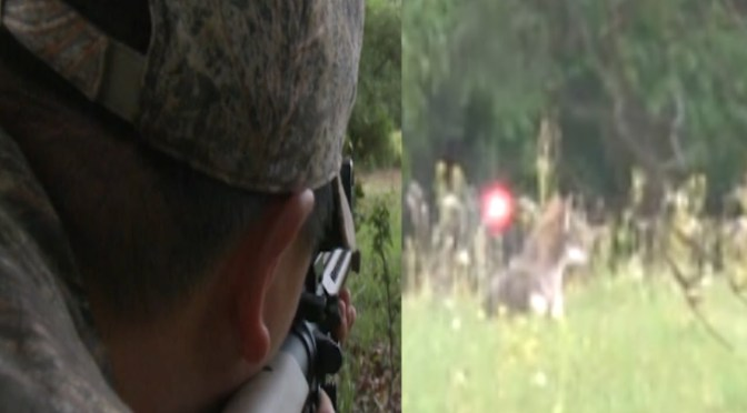 Coyote Taken Down by 9mm Tracer Round [Video]