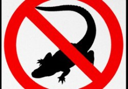 no_alligators_highway_sign_