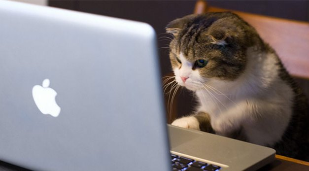 10 Reasons Why Being Your Own Boss Is The Cat's Meow