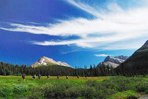 Private guided tour: a great way to have a unique Canadian Rockies experience.