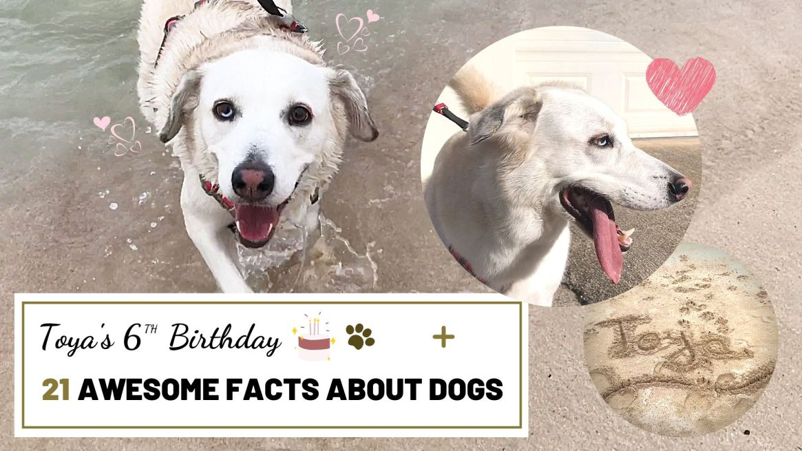 My Dog's Birthday + 21 Awesome Facts About Dogs | Music, Lifestyle & Food