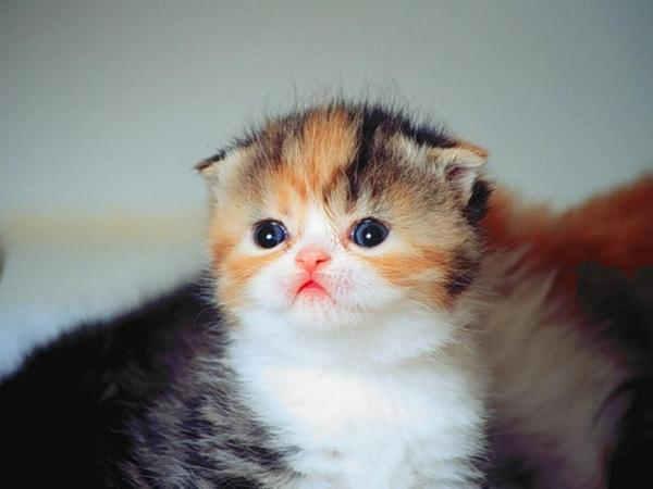 Unduh 92+  Gambar Kucing Yang Imut Terlihat Keren Gratis