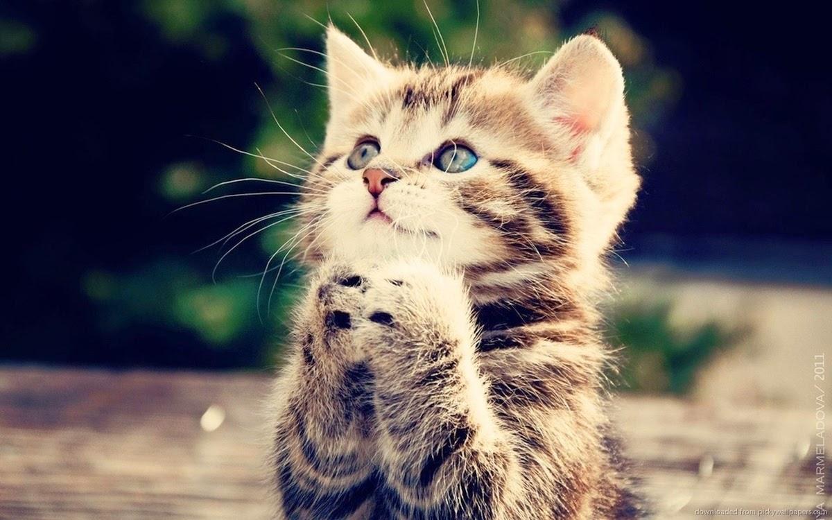 Unduh 93+  Gambar Tema Kucing Lucu Paling Bagus HD