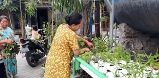 ITS Sosialisasikan Metode Hidroponik Paling Efektif