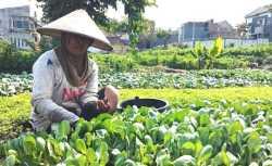 Antisipasi Anjloknya Harga Komoditas Pertanian Saat Panen Raya, Pemkot Batu Akan Bangun 2 Cold Storage