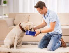 hrana - psi- hranjenje