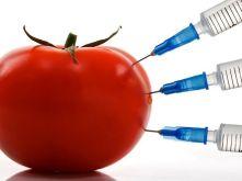 GMO midi