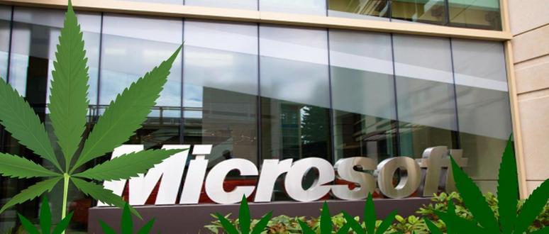 microsoft-konoplja-Kind Financial