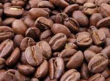 kava-zrno-midi1