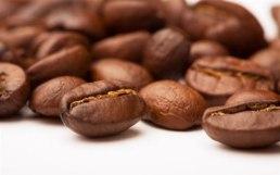 kava-zrno-midi3