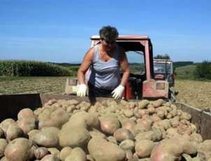 krumpir-urod-traktor-midi