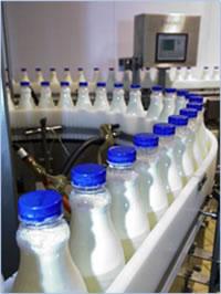 mlijeko-proizvodnja-midi1