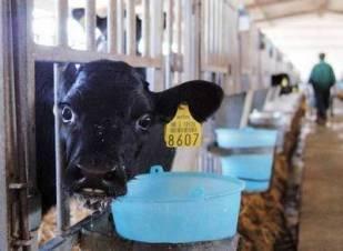 mljekari-proizvodnja-mlijeka-midi