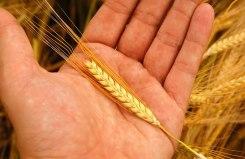 poljoprivreda-ruka-large