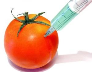 rajcica-sigurnost-hrane-midi