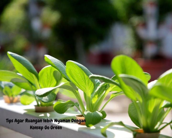 Tips Agar Ruangan Lebih Nyaman Dengan Konsep Go Green