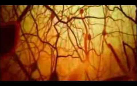 """Comparte Síguenos Últimamente he oído hablar mucho de un revolucionario proyecto científico llamado """"Blue Brain"""" […]"""