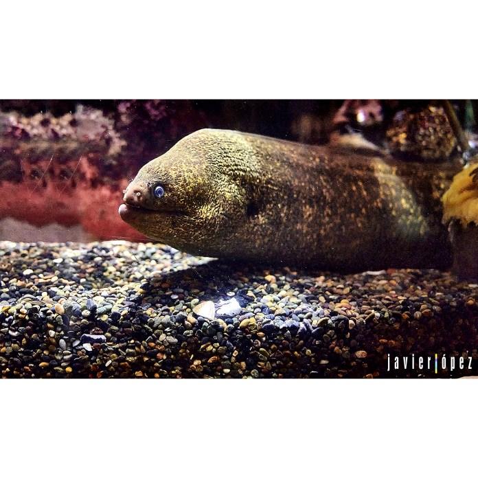 2019 San Francisco (Aquarium of the Bay)