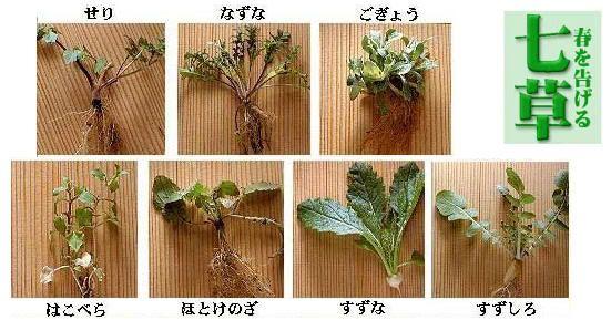 Las siete hierbas para la sopa japonesa depurativa de año nuevo (七草粥, nanakusagayu)