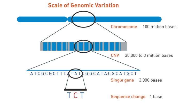 medium resolution of jax genomic education