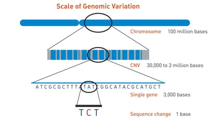 hight resolution of jax genomic education