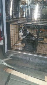 dog cage 25